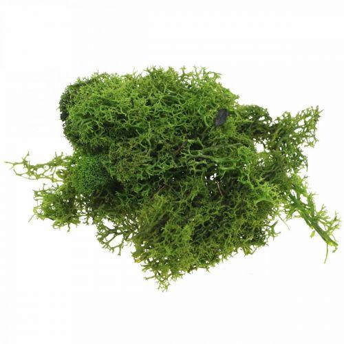 Dekorativ mos til kunsthåndværk mørkegrøn naturmos bevaret 40g
