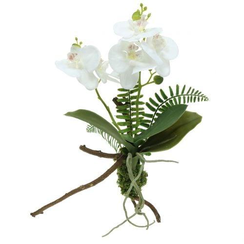 Hvid orkidé med mosekugler og rødder 36 cm
