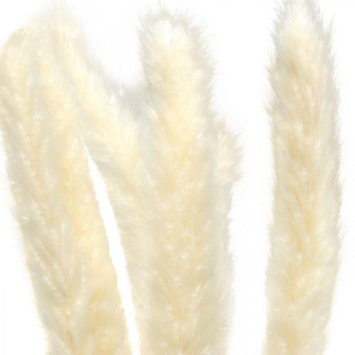 Tørret pampas græscreme til tørring af buket 65-75cm 6stk