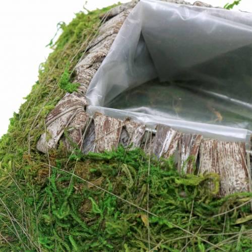 Plantehynde mos, bark 25cm × 25cm