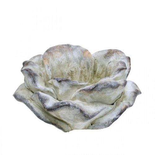 Rosenblomst til plantning, begravelsesblomster, stenrosa, betondekoration grå, abrikos, violet Ø11cm L22cm H9cm