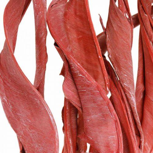 Strelitzia efterlader røde frostede tørre blomster 45-80cm 10stk