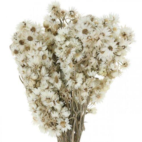 Evige blomster Tørrede blomster Buket Hvid Lille 15g