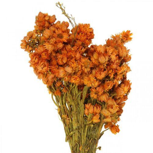 Evige blomster Tørrede blomster orange små 15g