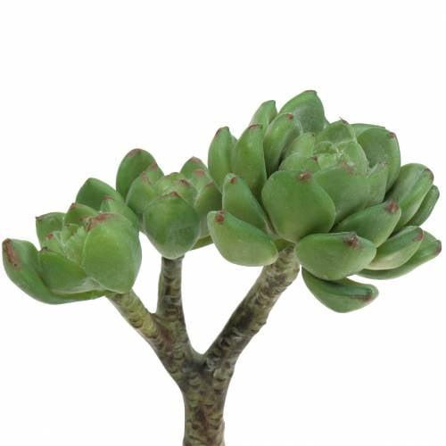 Succulent Echeveria kunstgrøn H15cm