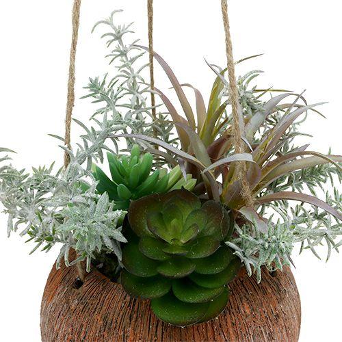 Sukkulentgrønt i en gryde til hængning 24 cm