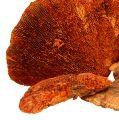 Træsvamp orange 1 kg